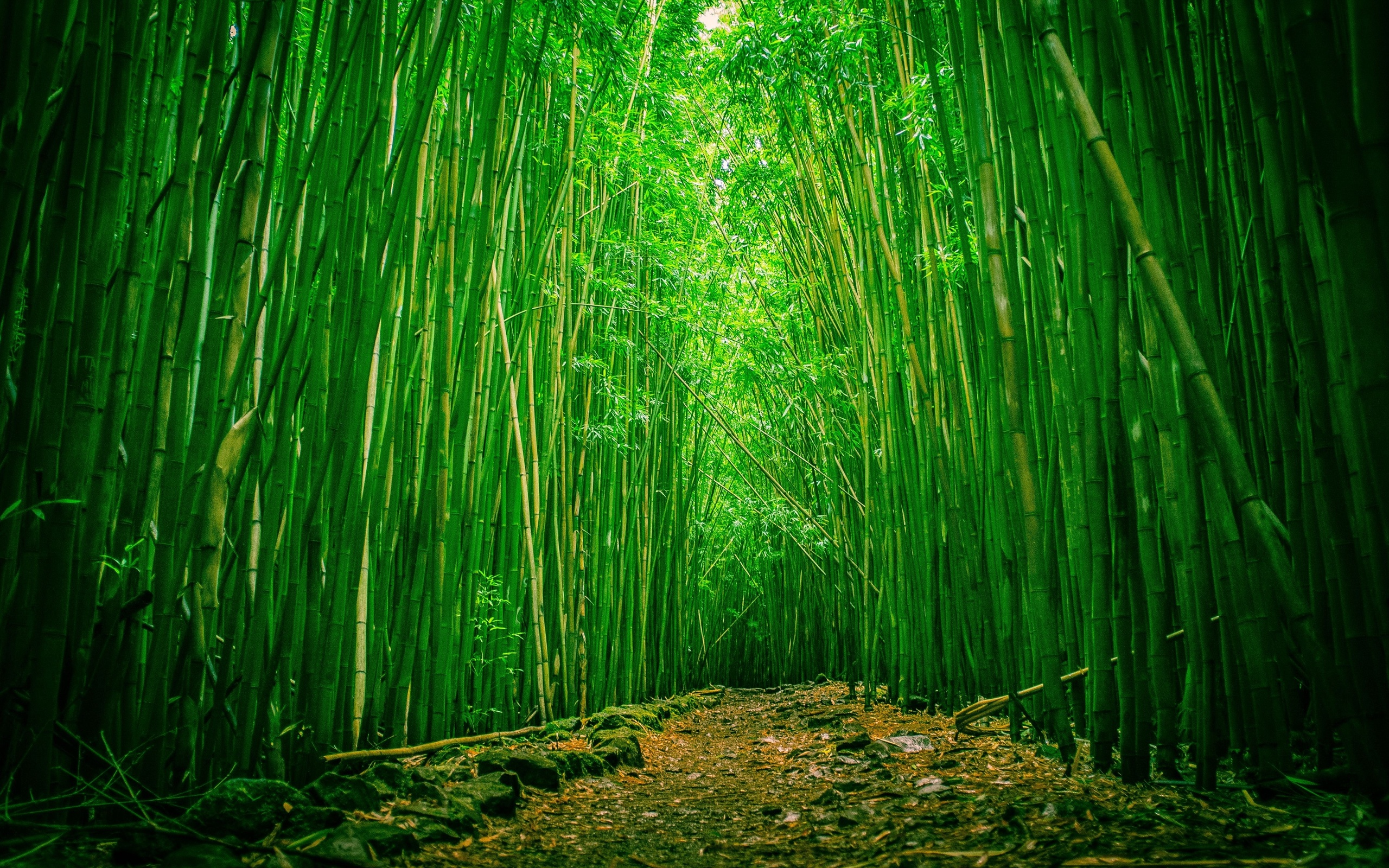 Bamboo-Forest-Wallpaper-Photos
